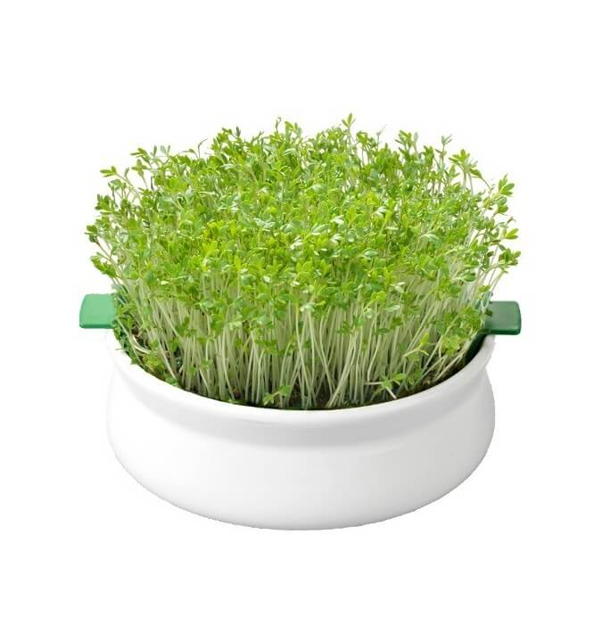 Coupelle de germination Germline 13.5cm