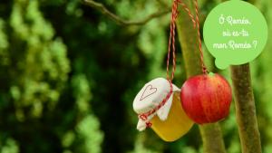 pomme bio et pot de compote de pomme accrochés dans un arbre
