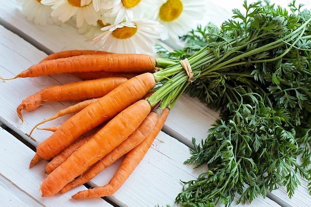 Zoom sur la graine germée de carotte.