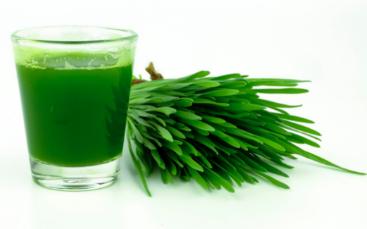jus d'herbe à l'extracteur de jus